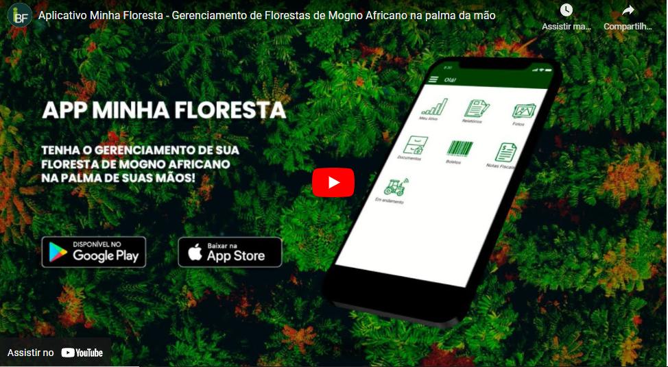 Vídeo Minha Floresta